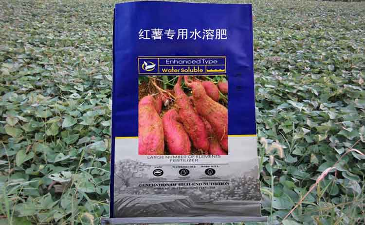 宁夏种植红薯用什莫水溶肥好?请选红薯专用肥!-寿光红旗科技有限公司