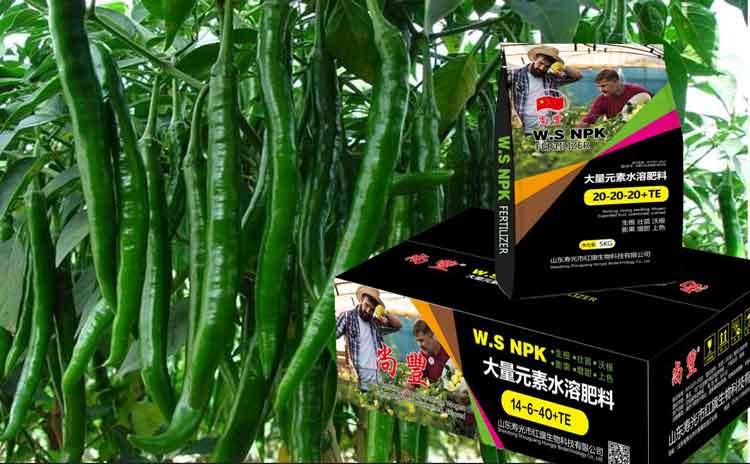 辣椒的种植技术您了解吗?辣椒用什么水溶肥合适?-寿光红旗科技有限公司