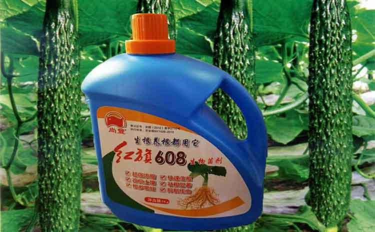 青海黄瓜用什么水溶肥好?寿光水溶肥生产厂家为您解析!-寿光红旗科技有限公司
