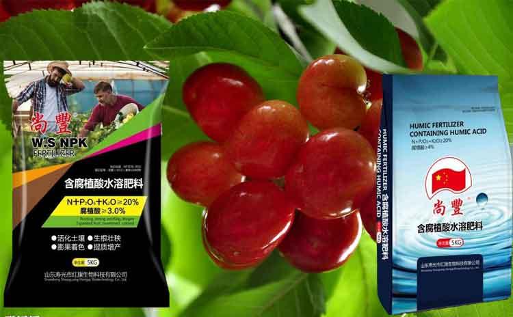 山东樱桃适合用什么样的水溶肥?樱桃专家为您解析!-寿光红旗科技有限公司