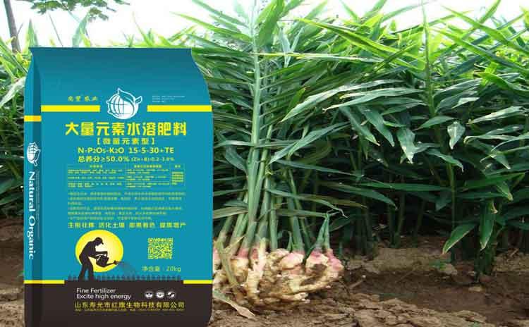 适合大姜的水溶肥料,昌邑青州大姜专用水溶肥!-寿光红旗科技有限公司
