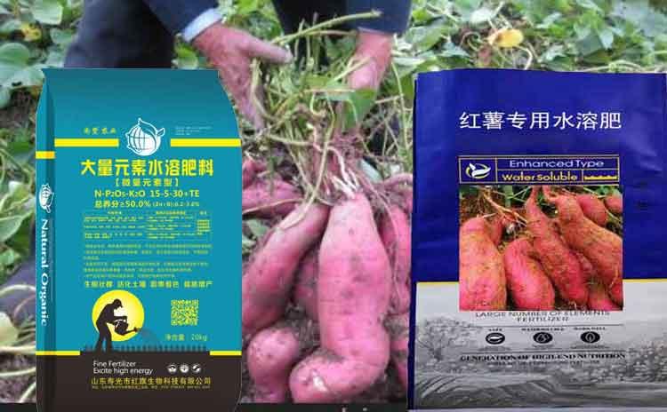 地瓜用什么肥料好?寿光市红旗地瓜专用肥-寿光红旗科技有限公司