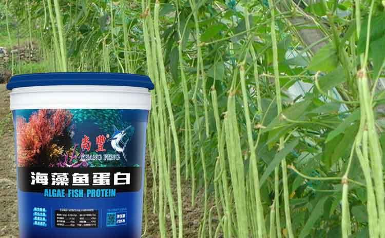 如何在能够让豆角高产丰收?该怎样使用水溶肥料?-寿光红旗科技有限公司