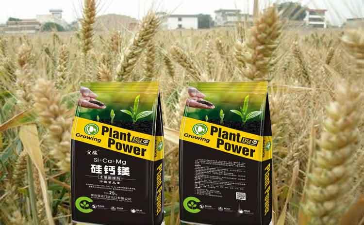 硅肥对于作物的生长有何作用?请看专家为您解析!-寿光红旗科技有限公司