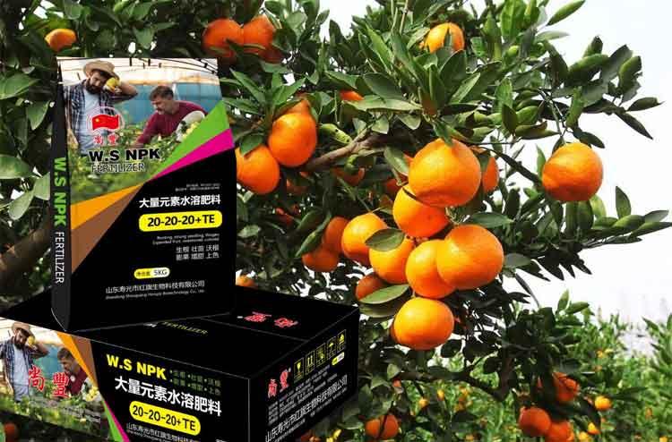 柑橘为何出现大小不等现象?寿光水溶肥专家告诉您真相!-寿光红旗科技有限公司